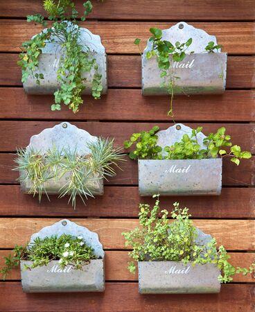 Vertical gardening concept. Plants in a mail box Standard-Bild