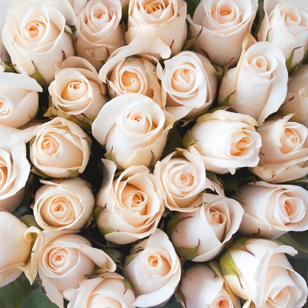 Peach colored Roses as a background Stock Photo