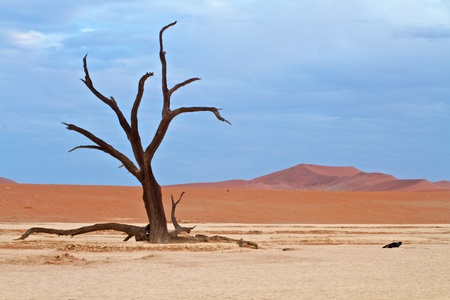 Dunes in the desert with lone tree Stock Photo