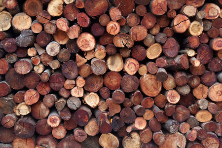 Logs of wood stacked as a background
