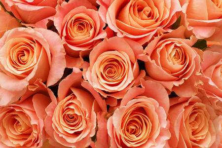 Orange Roses as a background