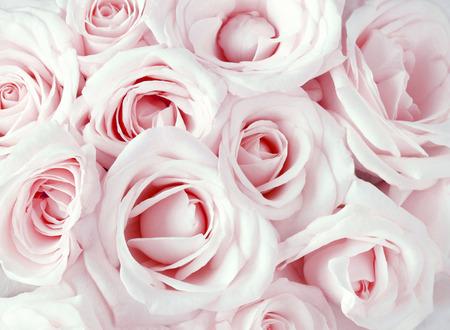 Roze rozen als achtergrond
