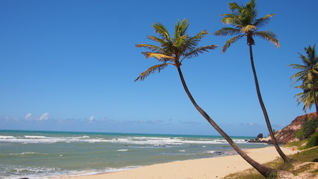 pipa: Palm trees on deserted beach
