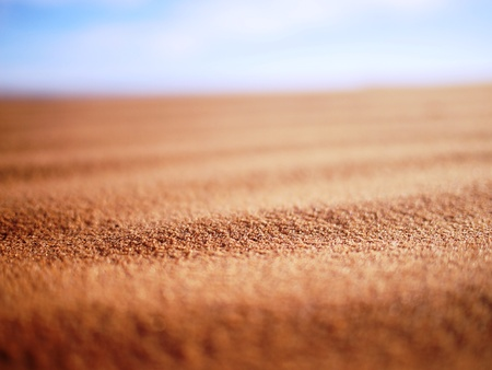 sandy brown: Grains of sand