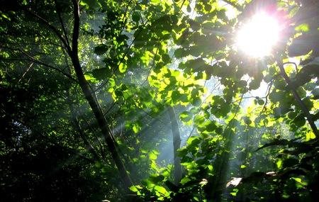 pierce: Rays of sunlight pierce through the trees