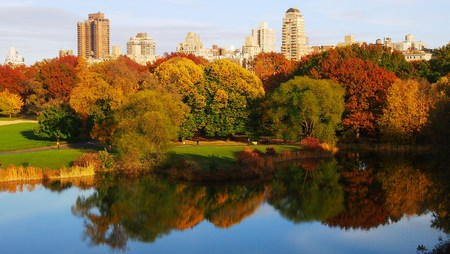 outdoor pursuit: Central Park during fall