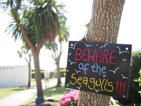 mousehole: A sign warning pub customers to beware of the seagulls