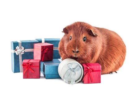 Animal is giving gifts - xmas Stock Photo