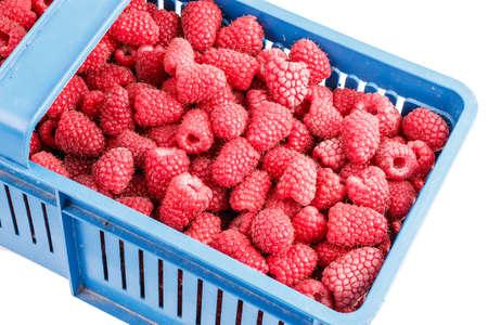 maturity: Freshly picked raspberries in the box