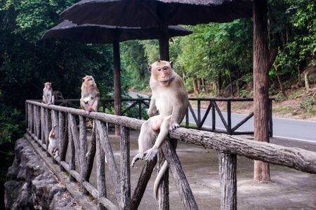 Monkeys perched on the fence