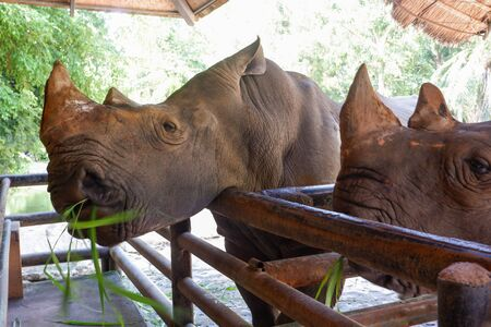Two rhinos in the Thailand zoo