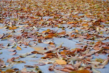 Autumn leaves, orange and yellow on the ground. 免版税图像