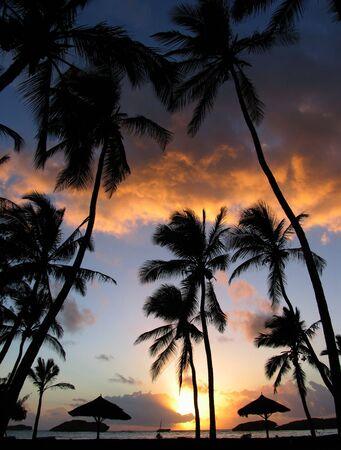 sunup: Sunrise through the Palms, in North Kenya