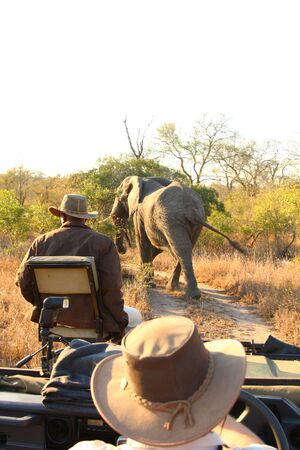Elephant in the Sabi Sand Reserve