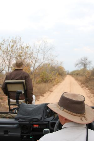 Safari game drive in Sabi Sands