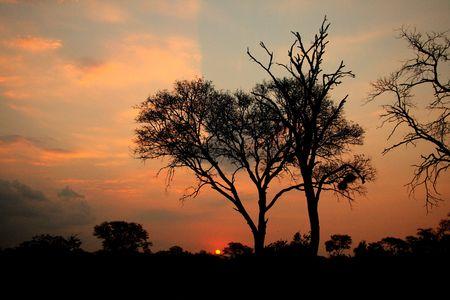 African Sunset, Sabi Sand Reserve, South Africa photo