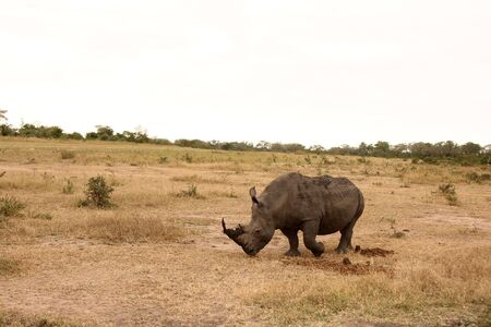 Rhino in Sabi Sand  Reserve, South Africa photo