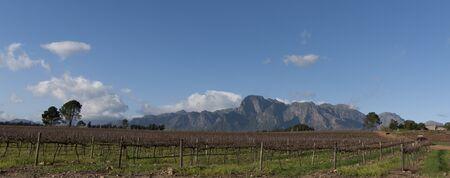 Stellenbosch wine region of South Africa