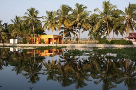 backwaters: Views on Kerela Backwaters, Cochin, India