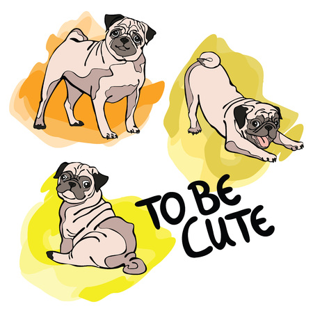 pug dog: To be cute. Pug Dog. Isolated object on white background. Illustration