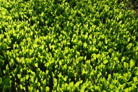 patterned wallpaper: Green leaves of plants forming a patterned wallpaper