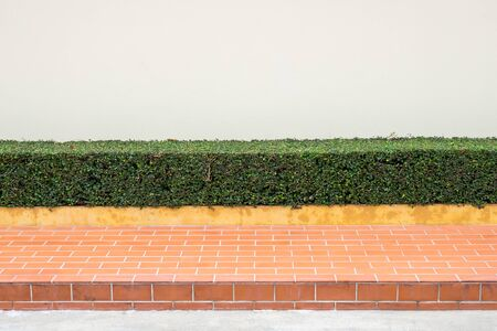 trimmed: Sidewalks and Trim Shrubs  Stock Photo
