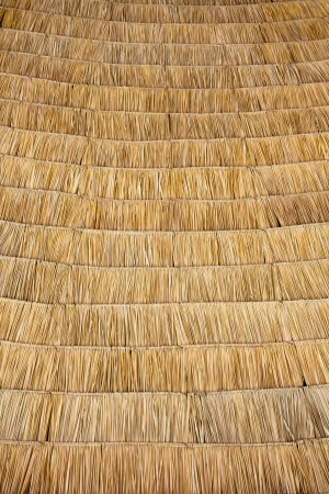 thatch: Straw pattern of thatch roof
