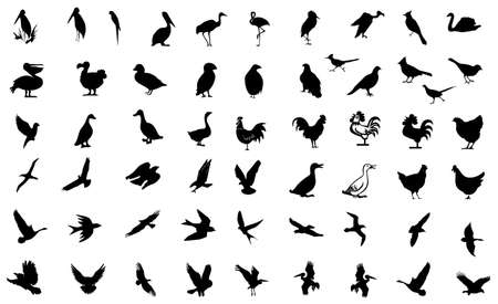 bird symbol Stock Photo - 8531217