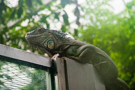 lizard Stock Photo - 8553966