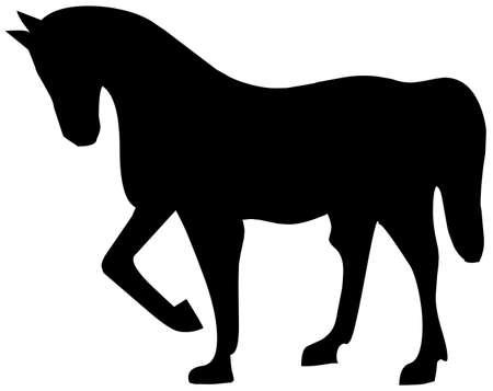horse Stock Photo - 8648710