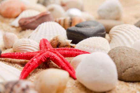 pearl on the seashell . The exotic sea shell . treasure from the sea Stock Photo