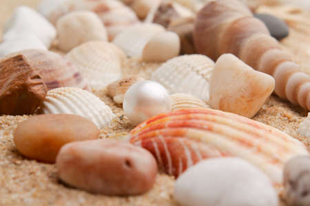 perfect waves: pearl on the seashell . The exotic sea shell . treasure from the sea