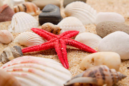 pearl on the seashell . The exotic sea shell . treasure from the sea photo