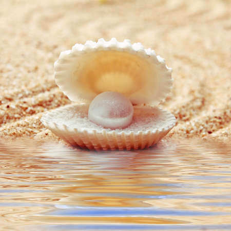 scallop shell: An open sea shell with a pearl inside. Stock Photo
