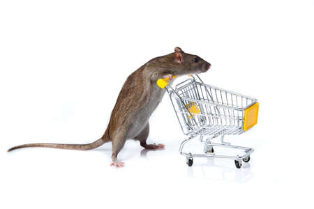 rat and the shopping cart  a rat with a basket Stock Photo