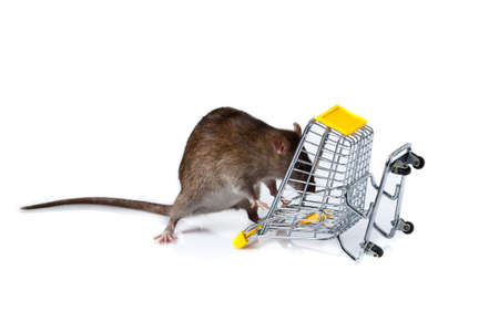 rat and the shopping cart  a rat with a basket Stock Photo - 13333905