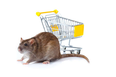 rat and the shopping cart  a rat with a basket Stock Photo - 13333912