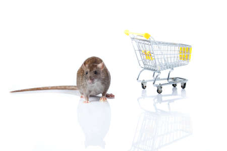 rat and the shopping cart  a rat with a basket Stock Photo - 13333895