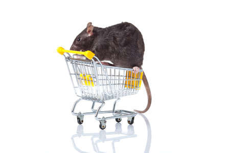 rat and the shopping cart  a rat with a basket Stock Photo - 13333909