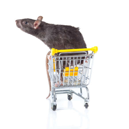 rat and the shopping cart  a rat with a basket Stock Photo - 13333908