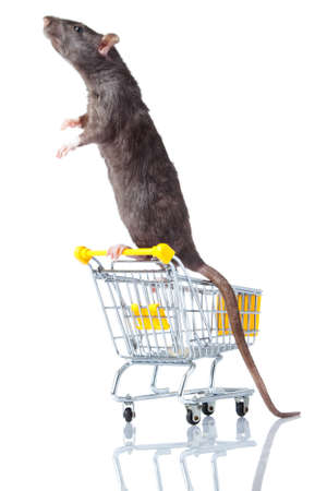 rat and the shopping cart  a rat with a basket Stock Photo - 13333896