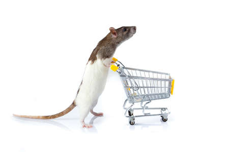 animal finger: rat and the shopping cart  a rat with a basket Stock Photo