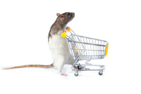 rat and the shopping cart  a rat with a basket Stock Photo - 13333903