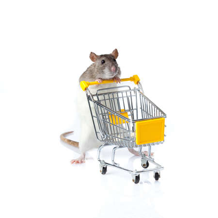 rat and the shopping cart  a rat with a basket 免版税图像