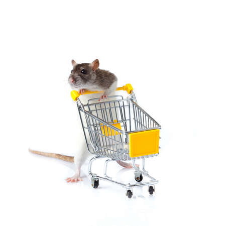empty shopping cart: rat and the shopping cart  a rat with a basket Stock Photo