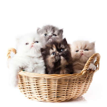 gato jugando: gatito sobre fondo blanco. gatito persa Foto de archivo