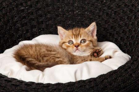Cat sleeping in the basket photo