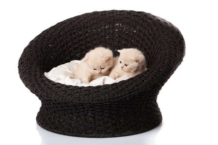 Cat sleeping in the basket photo