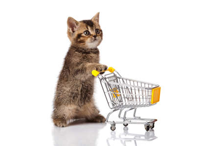 british cat with shopping cart isolated on white  kitten osolated photo