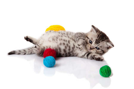 kitten with balls of threads  little kitten on white background  photo